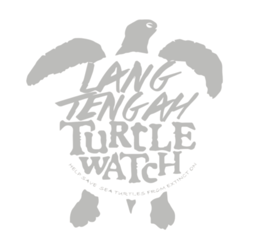 Sea Turtle Research Volunteers Needed for March 2016